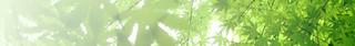 g_leaf01.png